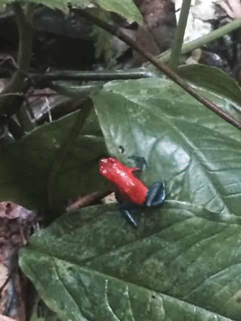 LaCarolinaLodge frog